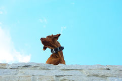 Голова собаки Стоковое Фото