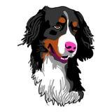 Голова собаки Стоковые Фото