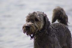 Голова собаки Стоковая Фотография