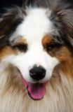 Голова собаки Стоковое Изображение RF