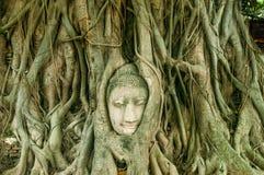 Голова старого Будды окруженная корнями дерева Wat Стоковые Изображения