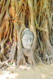 Голова статуи Будды в дереве укореняет на Wat Mahathat, Ayuttha Стоковые Фото
