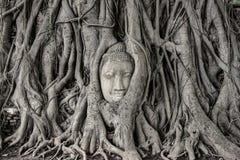 Голова статуи Будды в дереве укореняет Стоковое Изображение RF
