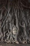 Голова статуи Будды в дереве Стоковое Изображение
