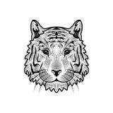 Голова тигра также вектор иллюстрации притяжки corel Стоковые Изображения