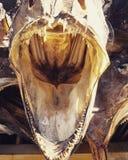Голова трески стоковое изображение