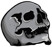 Голова черепа Стоковое фото RF