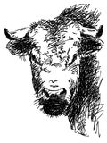 Голова Bull Стоковое фото RF