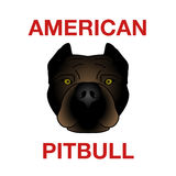 Голова Pitbull Стоковое Фото