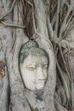 Голова s Будды 'в дереве укореняет стоковая фотография rf