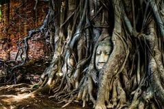 Голова ` s budda traped в корнях ` s дерева Стоковая Фотография