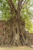 Головка Будды s в корне дерева Стоковое Изображение
