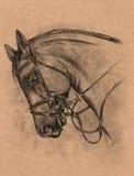 Головка лошади иллюстрация штока