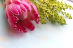 Головка цветка короля Protea Стоковое Изображение