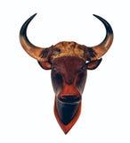 Головное животное Череп-головы одичалое Стоковые Изображения