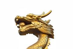 Головной дракон золота на предпосылке стоковые фотографии rf