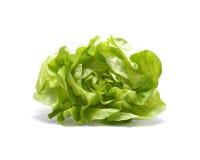 головной салат Стоковые Изображения RF