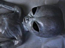Головной серый цвет чужеземца съемки Стоковые Изображения RF