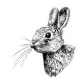 Головные зайцы в профиле, векторные графики эскиза Стоковые Фотографии RF