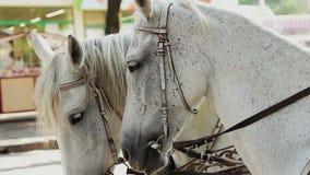 Головы белых лошадей сток-видео