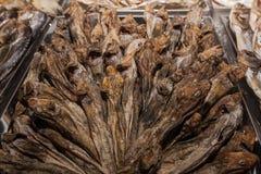 Головы высушенных рыб Стоковое Изображение