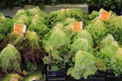 Головы салата для продажи на рынке фермеров стоковые изображения rf