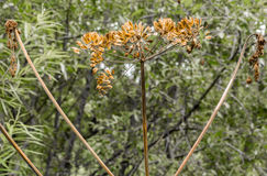 Головы семени Стоковое фото RF