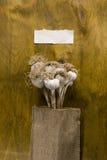 Головы чеснока в луче Стоковое Изображение RF