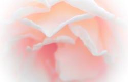 Голос розового стиля конспекта цветка сладостный мягкий Концепция для идей Стоковое Изображение