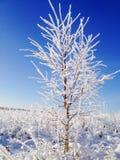 Гололедь на дереве Стоковые Фото