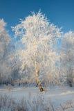 Гололедь на деревьях Стоковое Изображение RF