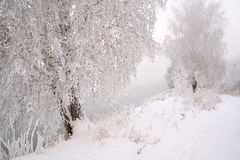 Гололедь на деревьях Стоковая Фотография RF