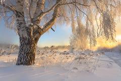 Гололедь на деревьях Стоковые Фотографии RF