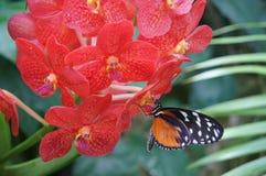 Голодная бабочка Стоковое Изображение RF