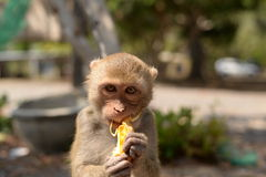 голодная обезьяна Стоковое Изображение
