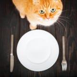 Голодный кот около пустых плиты и столового прибора Стоковая Фотография RF