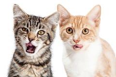 2 голодных маленьких котят на белизне Стоковые Фото