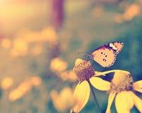 Год сбора винограда бабочки Стоковое Изображение