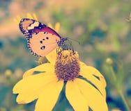 Год сбора винограда бабочки Стоковая Фотография