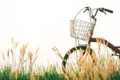 Год сбора винограда велосипеда на поле травы Стоковые Изображения RF