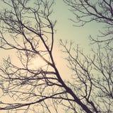 Год сбора винограда леса древесин силуэта дерева Стоковые Фото