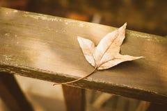 Год сбора винограда листьев осени ретро Стоковые Фотографии RF