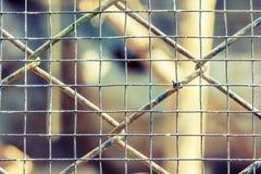 Год сбора винограда клетки сетчатый Стоковое Изображение RF