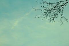 Год сбора винограда неба стоковая фотография rf