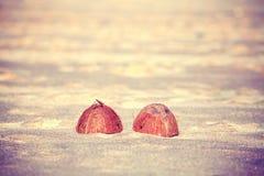Год сбора винограда тонизировал половины на пляже, малую глубину кокоса поля Стоковое фото RF