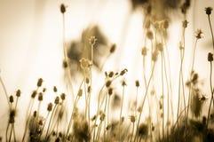 Год сбора винограда травы цветка на ослабляет утреннее время Стоковое Изображение RF