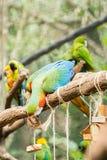 Голубая ара parrots птица на ветви дерева Стоковые Фотографии RF
