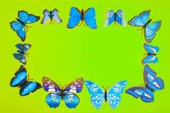 Голубая бабочка на зеленой предпосылке Стоковые Фотографии RF