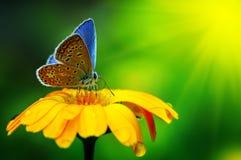 голубая бабочка Стоковая Фотография