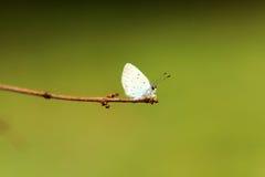 голубая бабочка Стоковое Изображение RF